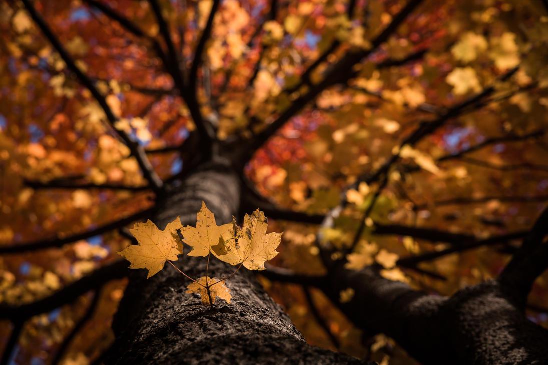 Leafy Trio by Spud667