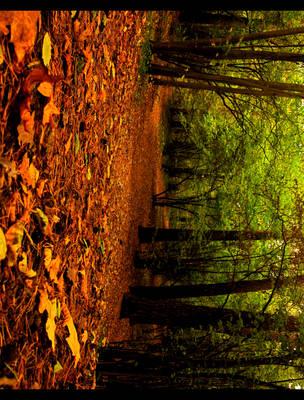 Autumn by Andarana