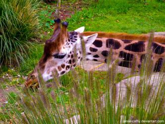 Girafe by Anne-Cathy