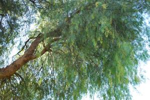 Tree by deathkokoro
