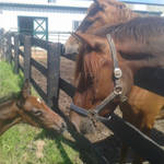 His first real encounter with other horses