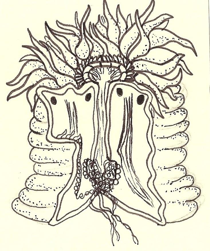 Sea Anemones Drawing Sea Anemone Drawing Inside of