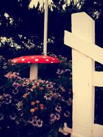 Mushroom by melissadallison