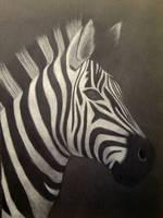 Zebra by melissadallison