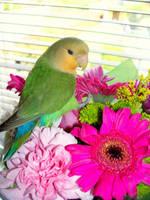 Lovebird by melissadallison