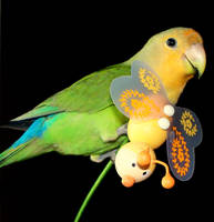 Lovebird II by melissadallison