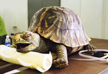 Miller Lite Commercial Tortoise