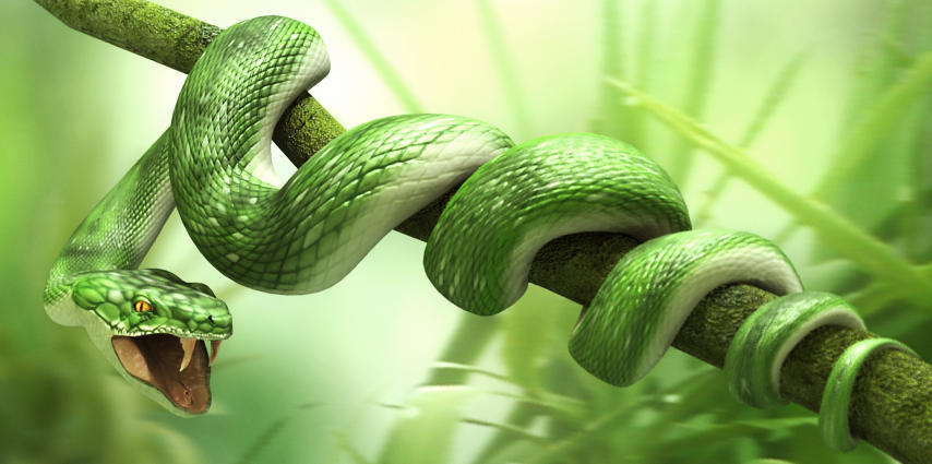 snake by CR-67