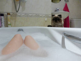 Cat might be a pervert