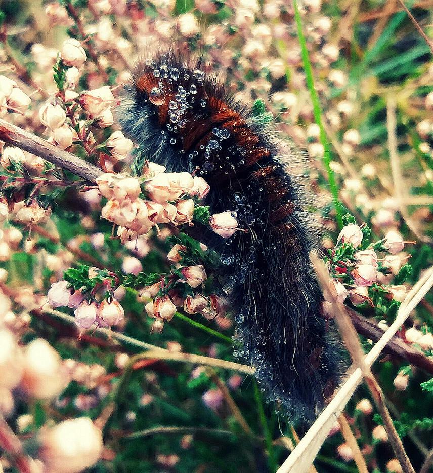 Morning Caterpillar. - 2016 by Leludar