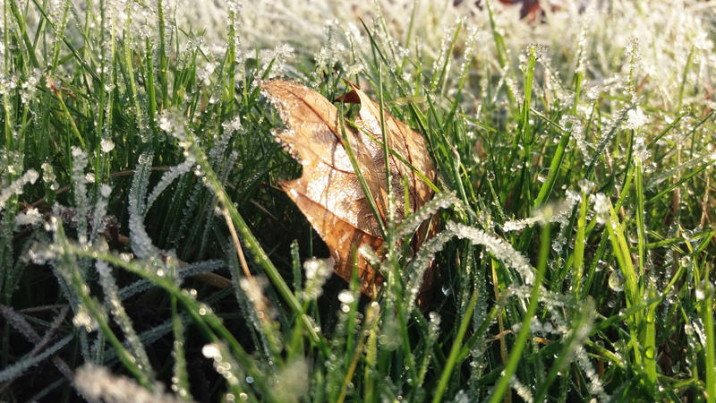 Frost grass. - 2016 by Leludar