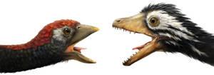 Archeopteryx vs. Confuciusornis
