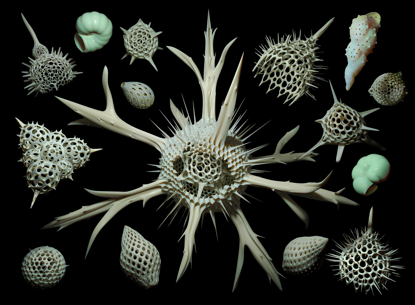 Radiolaria And Foraminifera By Eldarzakirov On Deviantart