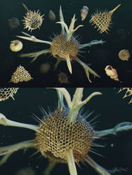 Radiolaria and Foraminifera remastering by EldarZakirov
