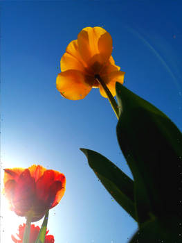 In the Sunshine World