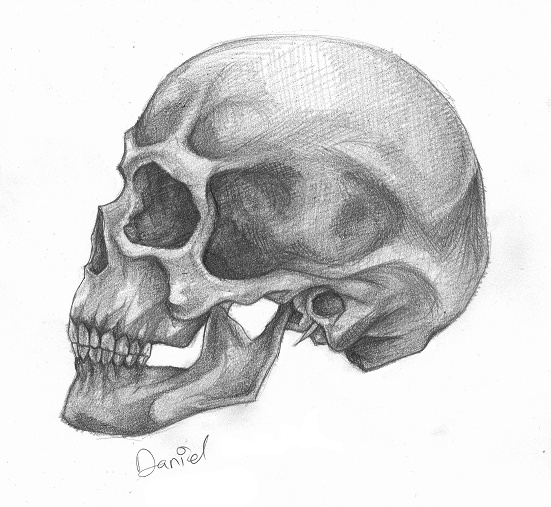 skull - profile by wannasleep