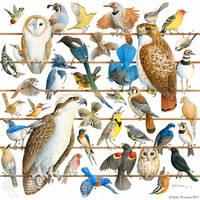 Birds of Oregon by WaryCassowary