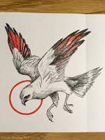 Plumbeous Kite by WaryCassowary