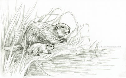 Beaver Dad by WaryCassowary