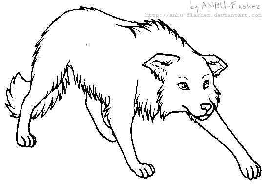 Lineart Border Collie By Anbu Flashez