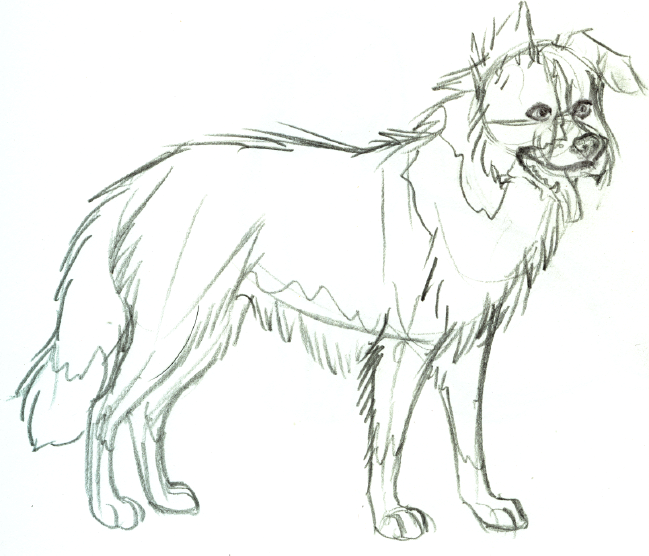border collie sketch by anbu flashez