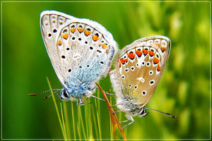 Making Butterflies II by Rose-in-love