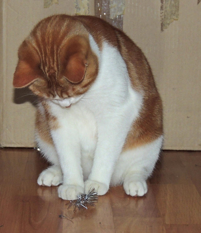 Kitty by Adeleene