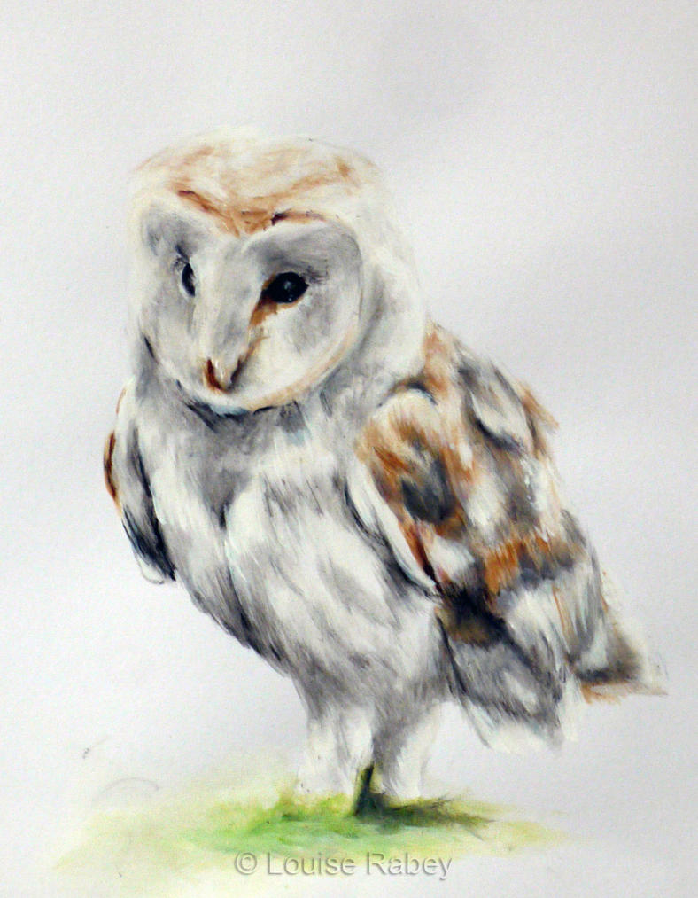 Owl by louise-rabey