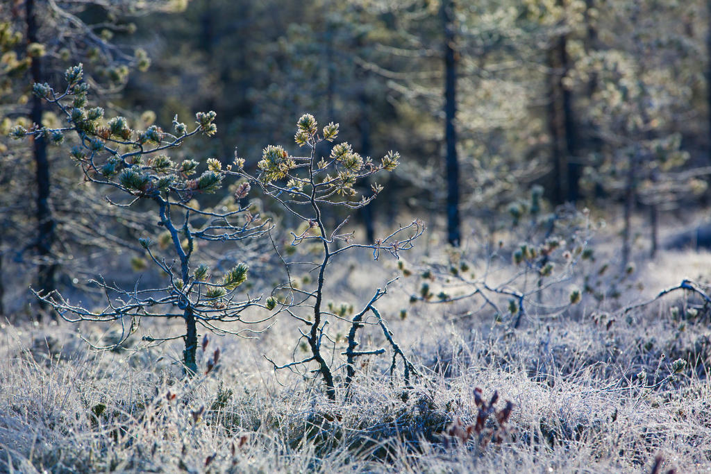 First frost by olgaFI