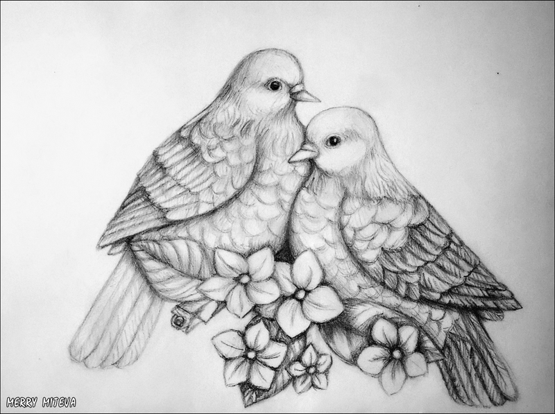 simple dove pencil drawing
