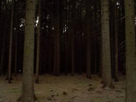 Dark forest by Lingxiaoyn