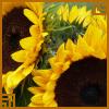 sun flower avatar by thebluemaiden