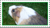 guinea pig stamp by thebluemaiden