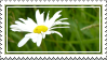 daisy stamp by thebluemaiden