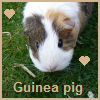 Guinea pig heart avatar by thebluemaiden