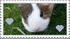 Guinea pig heart stamp by thebluemaiden