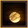 Golden Moon Avatar by thebluemaiden