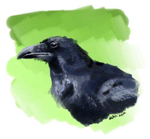 Raven by SilverDragalos