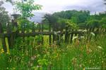 Imagine a meadow