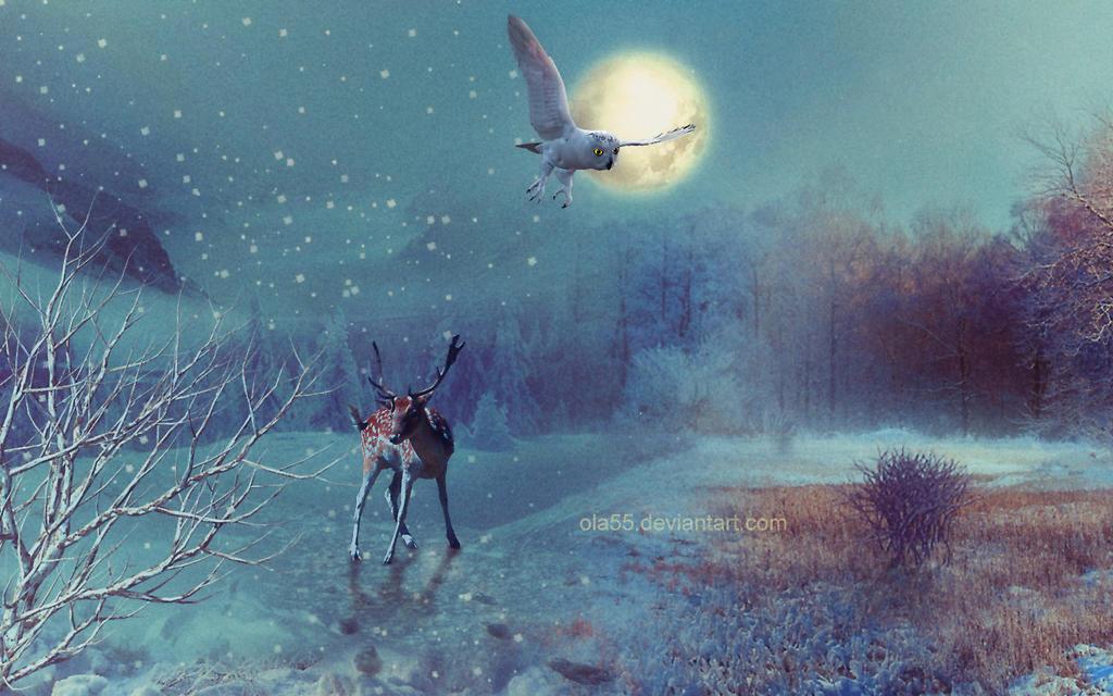 Owl by Ola55