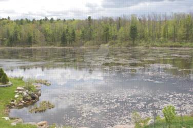 On Whalen Pond 1