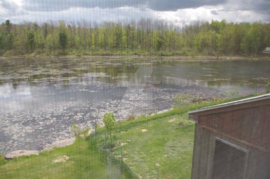 On Whalen Pond 2