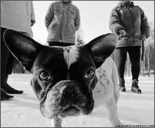 Dog by jane-art