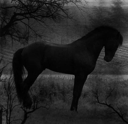 http://fc07.deviantart.com/fs13/f/2007/025/4/0/dark_by_CelticWolfMaiden.png