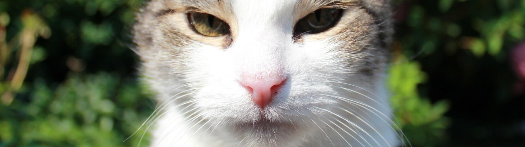 dual screen 3840x1080 my cat by Heathrip666
