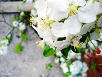Flowers by NorryLasAnimales