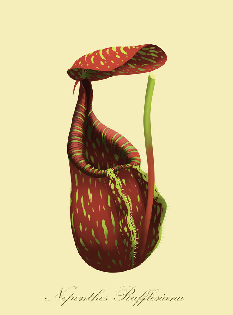 Nepenthes Series: Nepenthes Rafflesiana (Lower) by poecillia-gracilis19