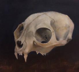 Skull study by QuicksilverCat