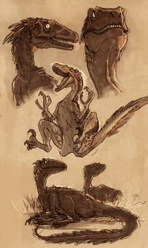 Utahraptor sketches