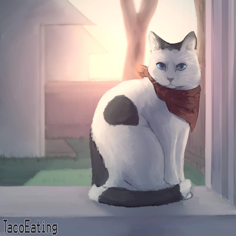 Cattttt